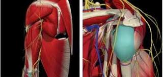 Clínica de Fisioterapia Delta: Dolor de hombro